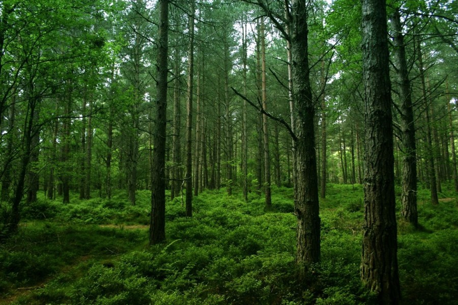 Photo of green forest