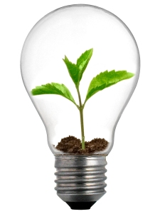 Sprout Lightbulb Growth Groups