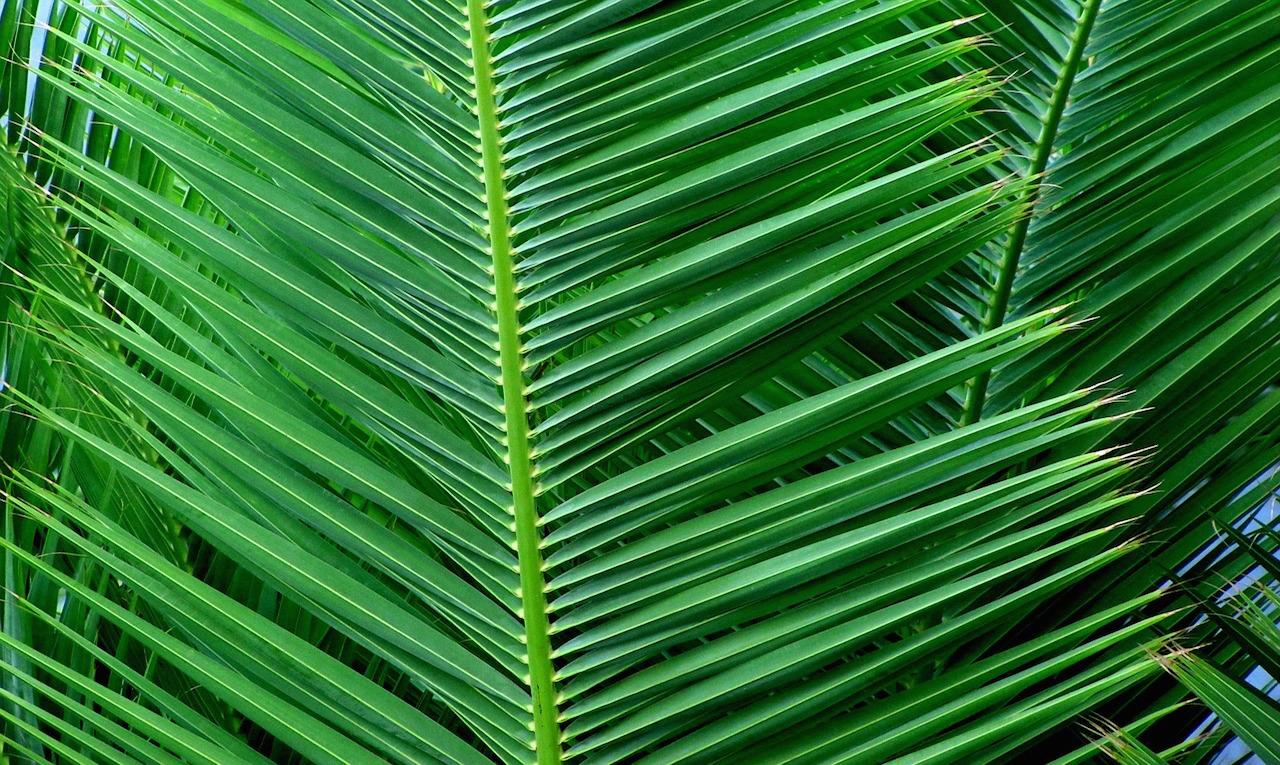palm sunday - photo #34